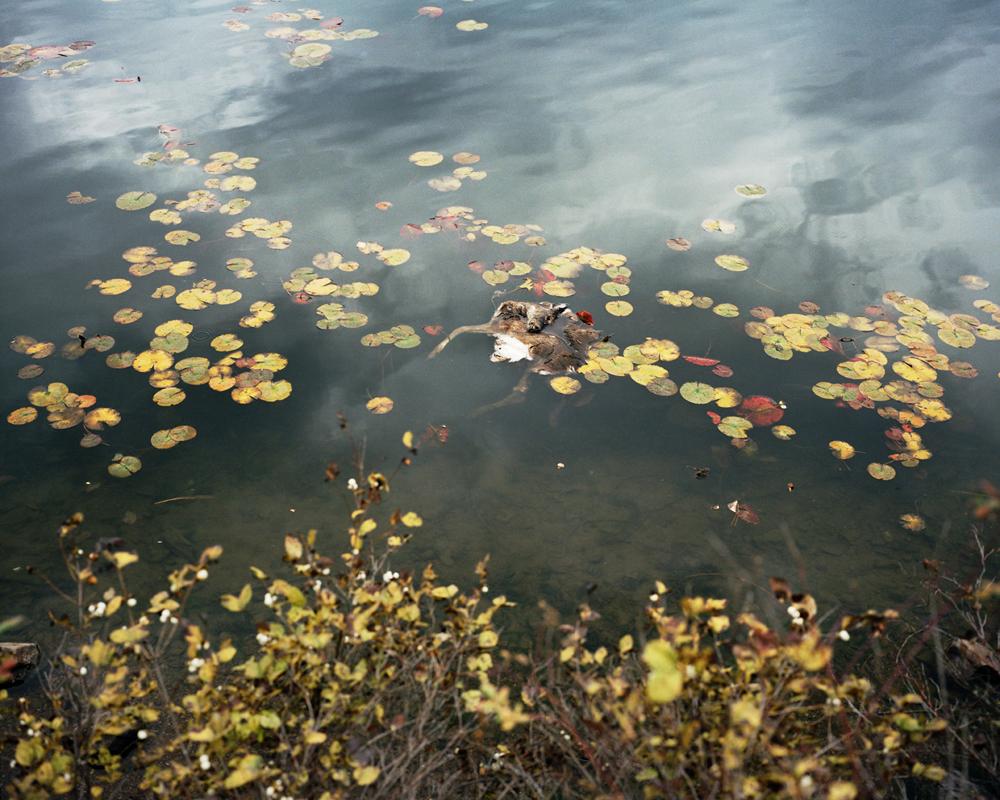 Fernan_Floating_Deer