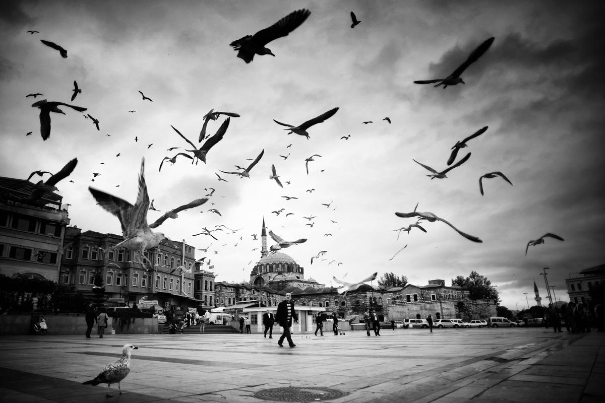 Dedeoglu_Mustafa_ 8