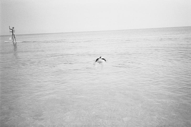 11_Bluebird©Anna Faragona
