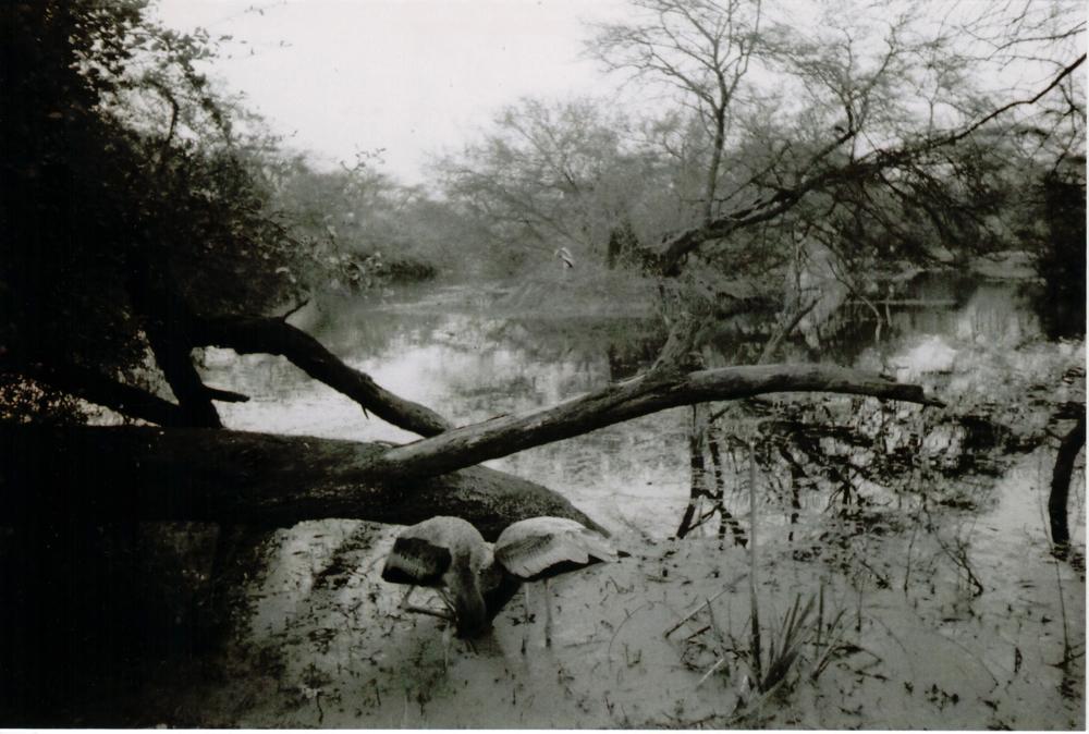 Bharatpur2