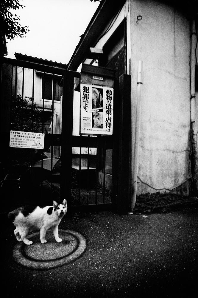 CHRISTOPHER_BUSH_TOKYO-12