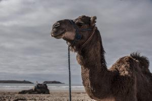 Marocco, MOROCCO